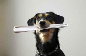 credit: istockphoto.com/carenas1 - nicht jeder Informationsüberringer hat die gleichen Absichten...